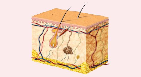 Skin Diagram at Eden Skin & Laser Clinic